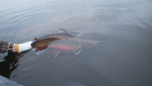 Record Brook Trout